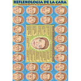 FICHA REFLEXOLOGIA DE LA CARA REF 4039